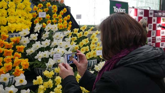 Taylors Bulbs Daffodil Day 100419_GTN112.jpg