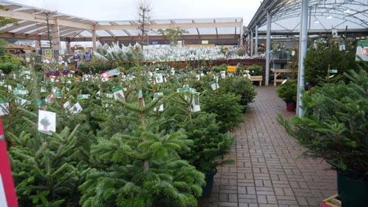 Dobbies Edinburgh 251119_GTN073.jpg