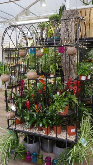 Notcutts Norwich Houseplants250419_GTN025.jpg