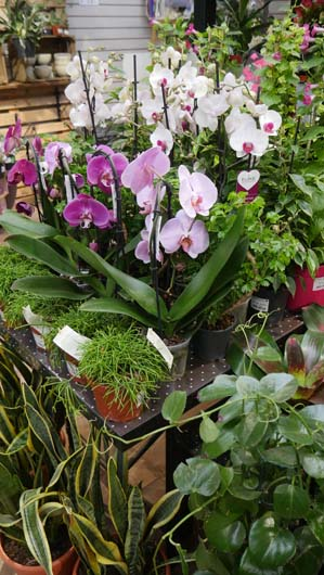 Notcutts Norwich Houseplants250419_GTN049.jpg