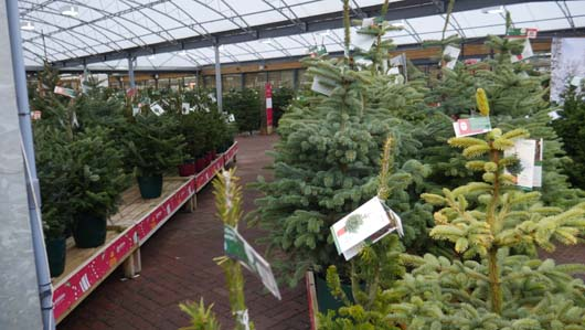 Dobbies Edinburgh 251119_GTN074.jpg