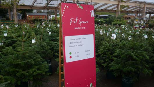 Dobbies Edinburgh 251119_GTN072.jpg