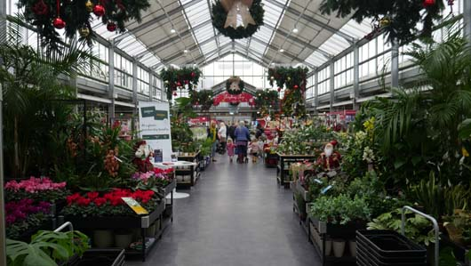 Dobbies Edinburgh 251119_GTN006.jpg