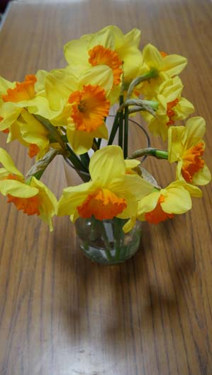 Taylors Bulbs Daffodil Day 100419_GTN016.jpg