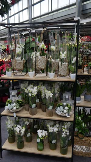 Dobbies Edinburgh 251119_GTN013.jpg