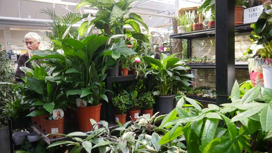 Notcutts Norwich Houseplants250419_GTN046.jpg