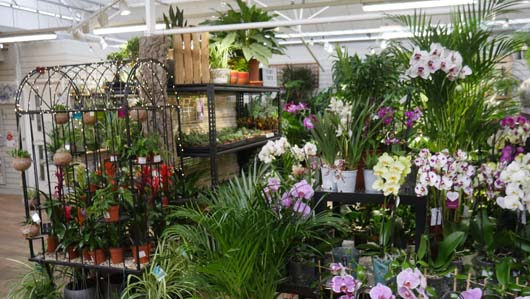 Notcutts Norwich Houseplants250419_GTN024.jpg