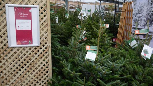 Dobbies Edinburgh 251119_GTN071.jpg